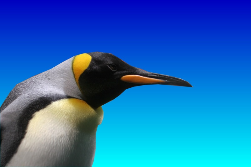 A Linux penguin looms into view.